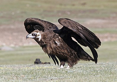 Birds Mongolia